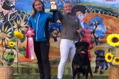 "21.09.2019 Rottweiler Club Show ""Чемпионат Юга России"" , Краснодар (Россия)"