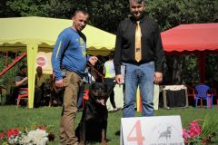 Russian Rottweiler Show «CUP MOSCOW 2019»,